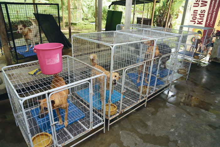 Malaysia Independent Animal Rescue (MIAR)