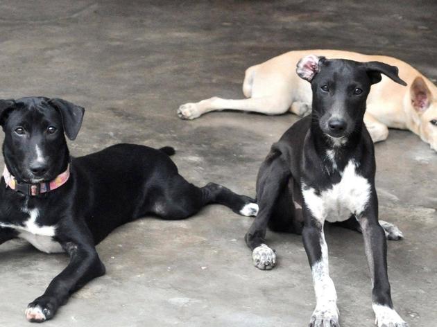 Malaysian Dogs Deserve Better