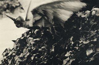 Joan Fontcuberta ('Cercophitecus Icarocornu in Flight' from the series by Joan Fontcuberta and Pere Formiguera)