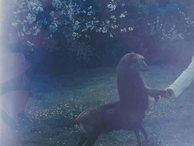 Joan Fontcuberta ('Centaurus Neandertalensis 2' from the 'Fauna' series by Joan Fontcuberta and Pere Formiguera)