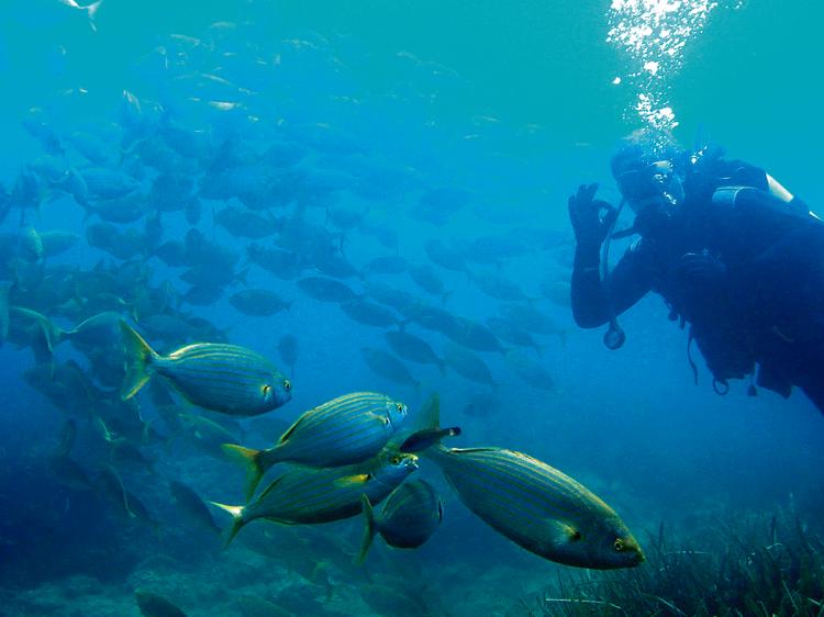 El paraíso bajo el agua en les Illes Medes
