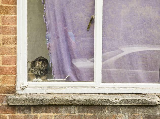Cat in the corner