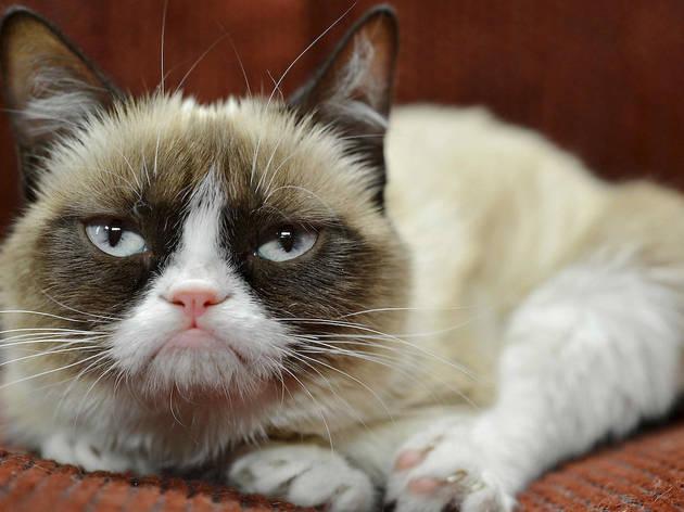 Grumpy Cat appearance