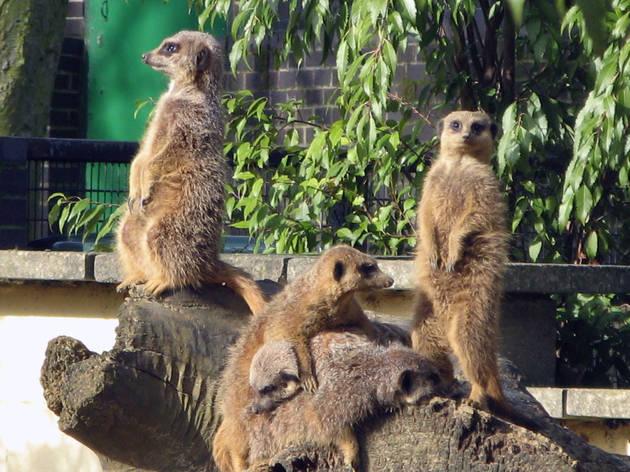 Summer Fun at Battersea Park Children's Zoo
