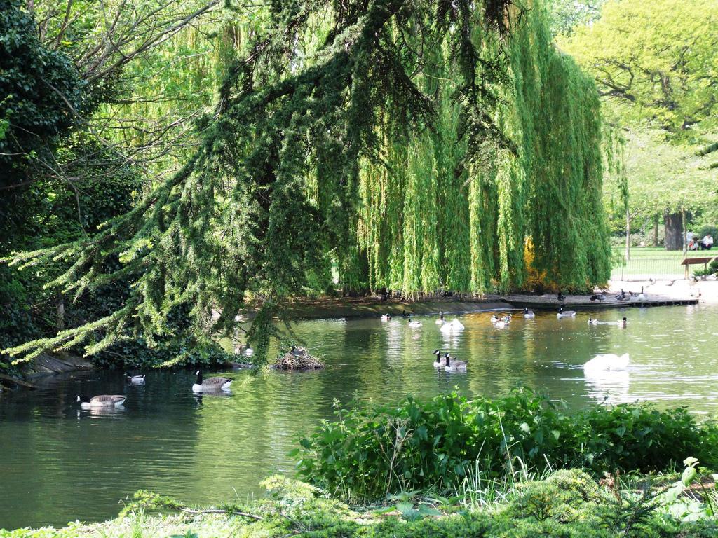 Fait Maison in the Park