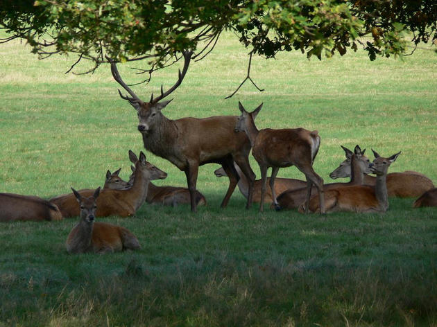 Start the day with a stroll in Richmond Park