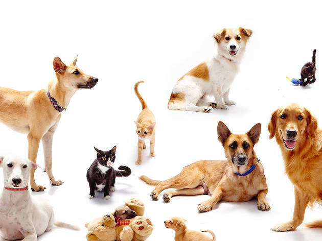 SPCA animals