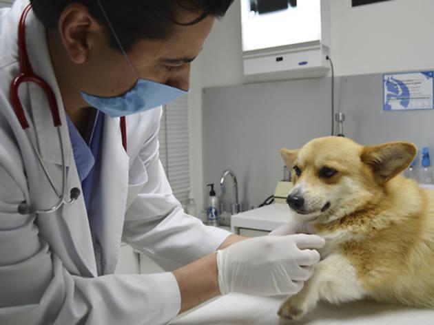 Hospitales veterinarios abiertos las 24 horas en la CDMX