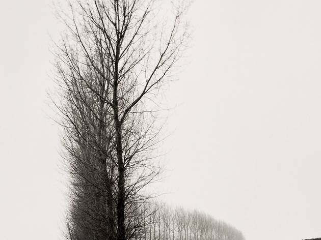 Peter Cattrell (Line of Trees, Theipval, Somme)