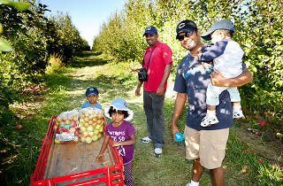 Apple Holler is one of the best spots for apple picking near Chicago.