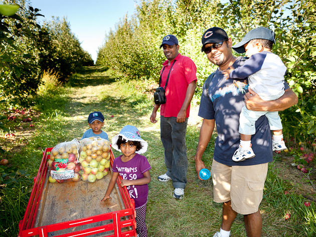 Go Apple Picking Near Chicago At These Local Orchards This