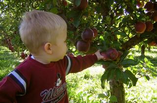Jonamac Apple Orchard