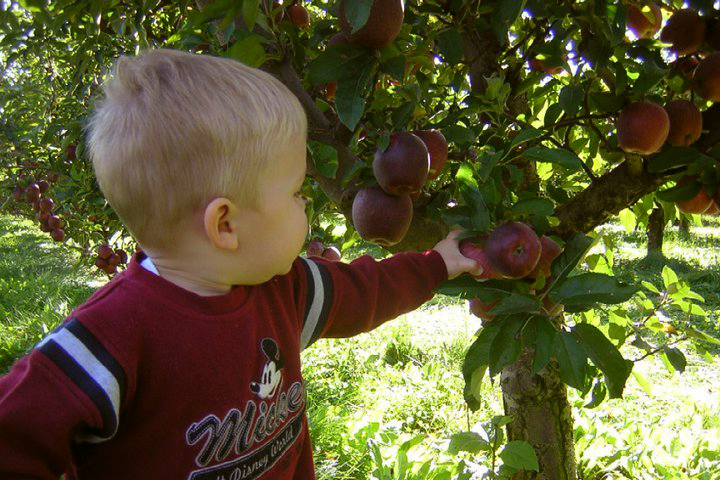 Jonamac Apple Orchard