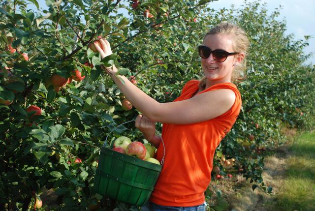 All Seasons Apple Orchard, Woodstock