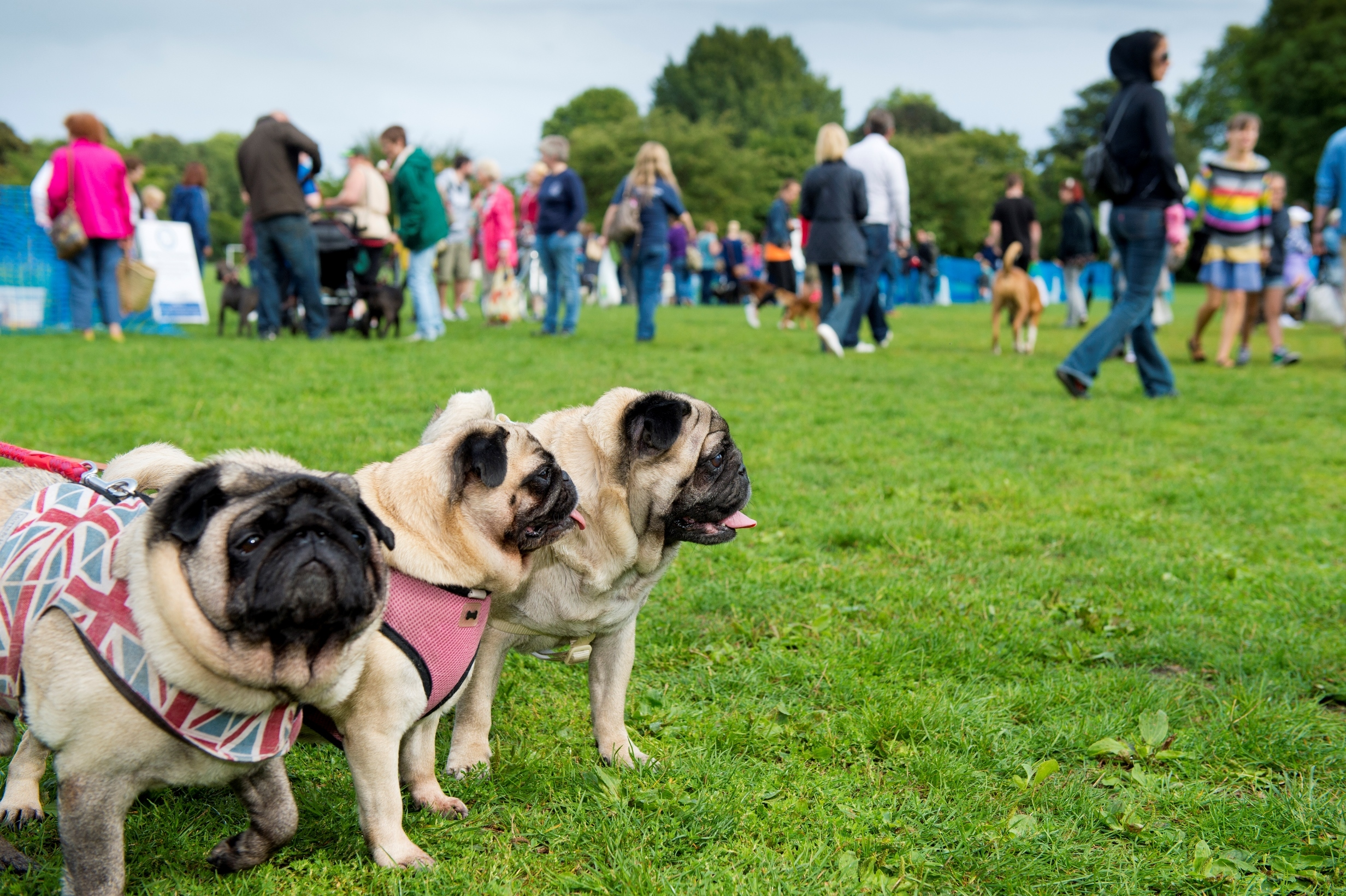 Battersea Dogs & Cats Home Annual Reunion and Fun Day
