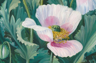 Marianne North ('Papaver Somniferum')