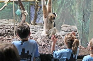 Lincoln Park Zoo Summer Camp