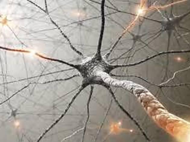Ciclo de cursos sobre salud y neurociencia