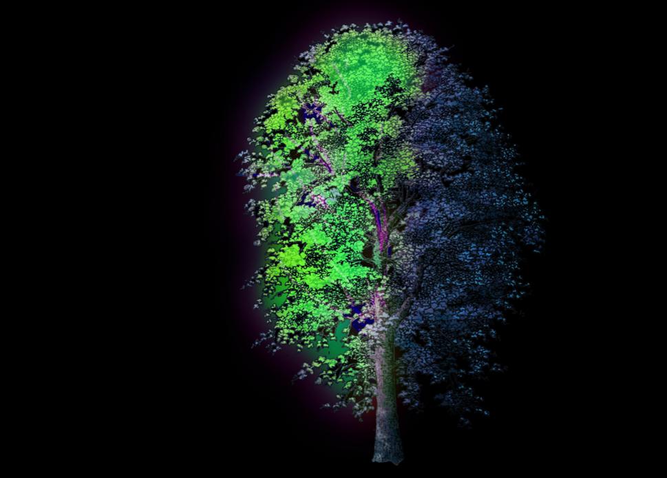 Héhé – 'Radiant Tree'