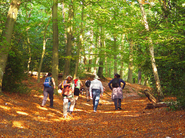 Autumn Ambles, free walks in London