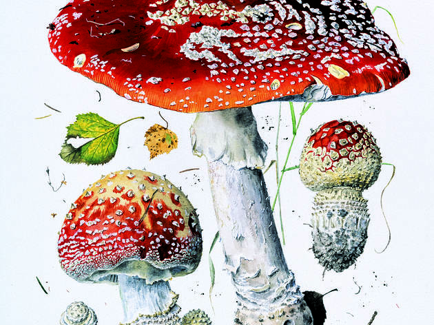Deadly and Disgusting Plants and Fungi