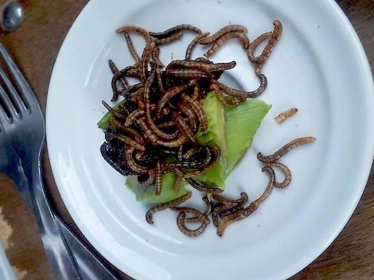 Des insectes pour l'apéro • Le Festin Nu