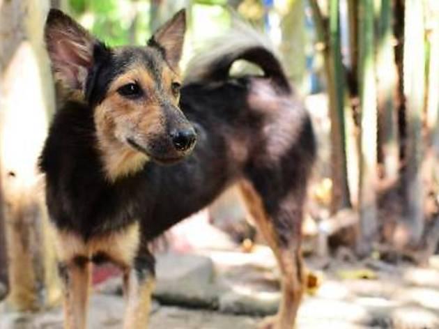 Call for volunteers: Penang Animal Welfare Society (4PAWS)