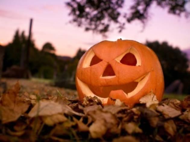 Halloween week at Jammin'