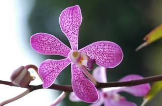 Flower arranging at Tropical Spice Garden