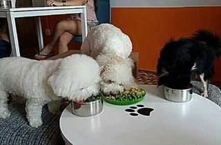 Bone Appetit Pets Centre