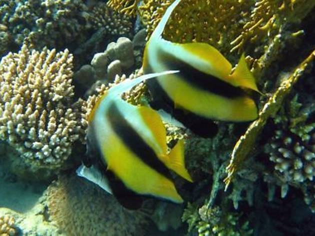 Penang Aquarium