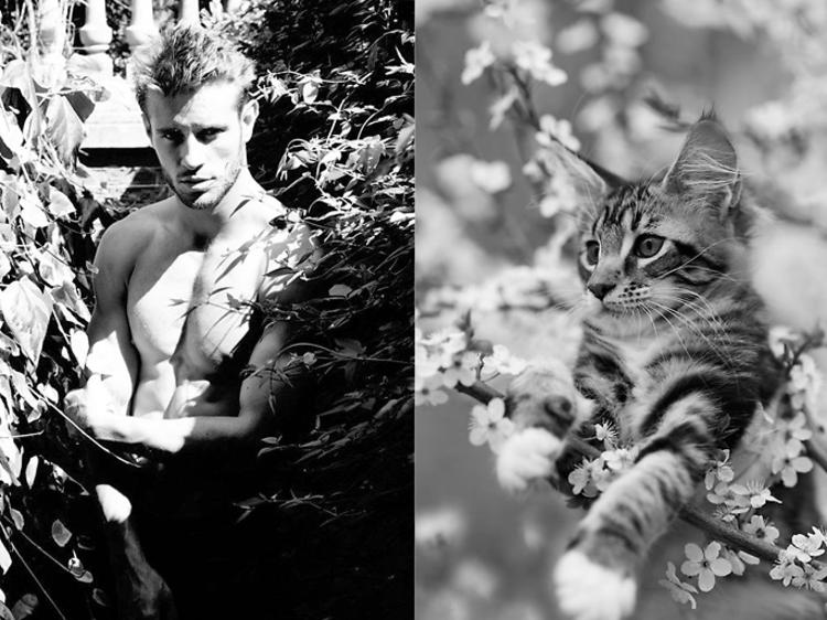 Félinophile • Des hommes et des chatons
