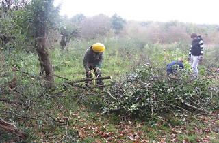 Bushcraft Skills, Epping Forest