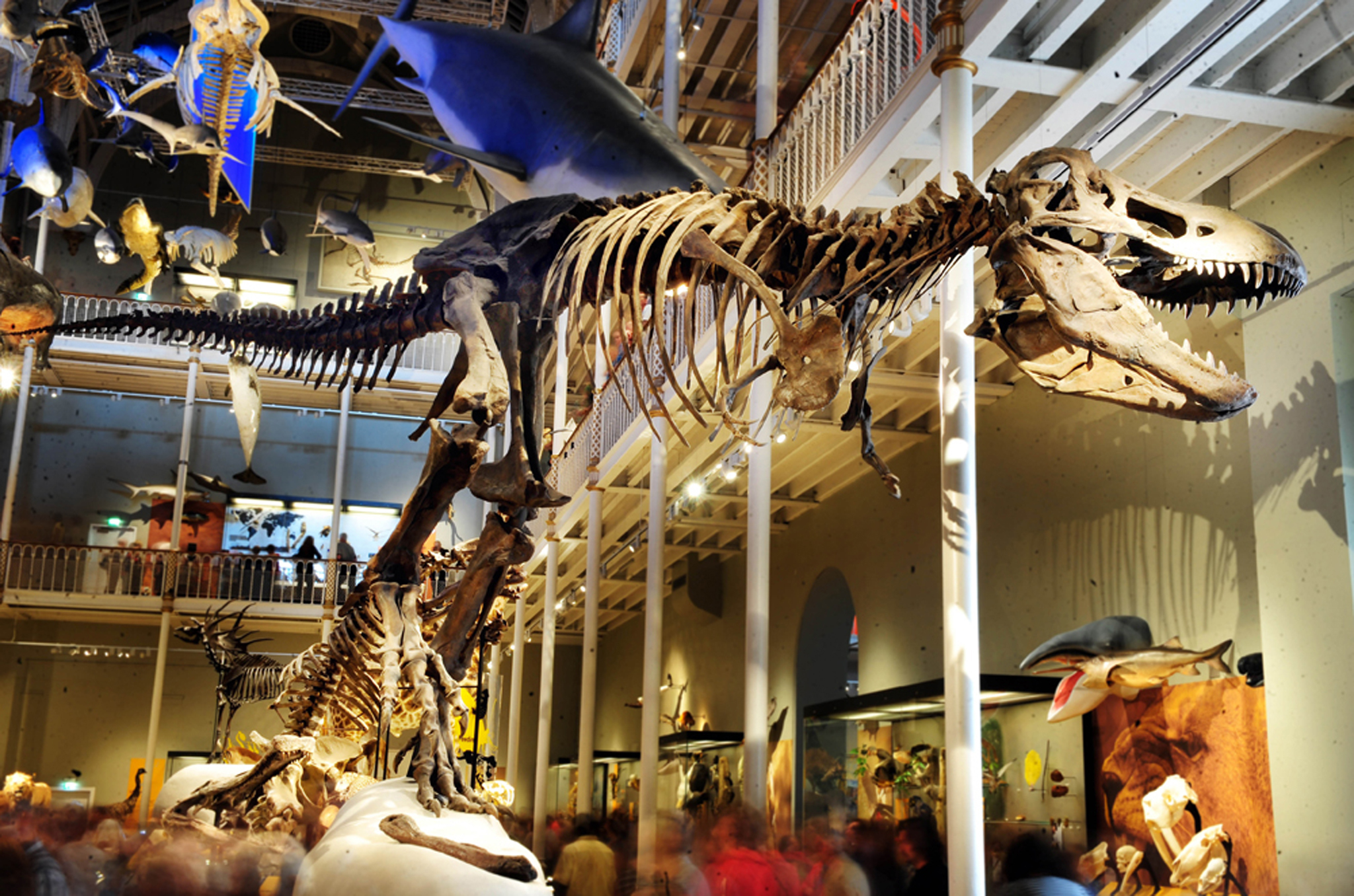 The best museums in Edinburgh