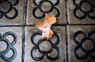 Tardor 2014, Barcelona, otoño