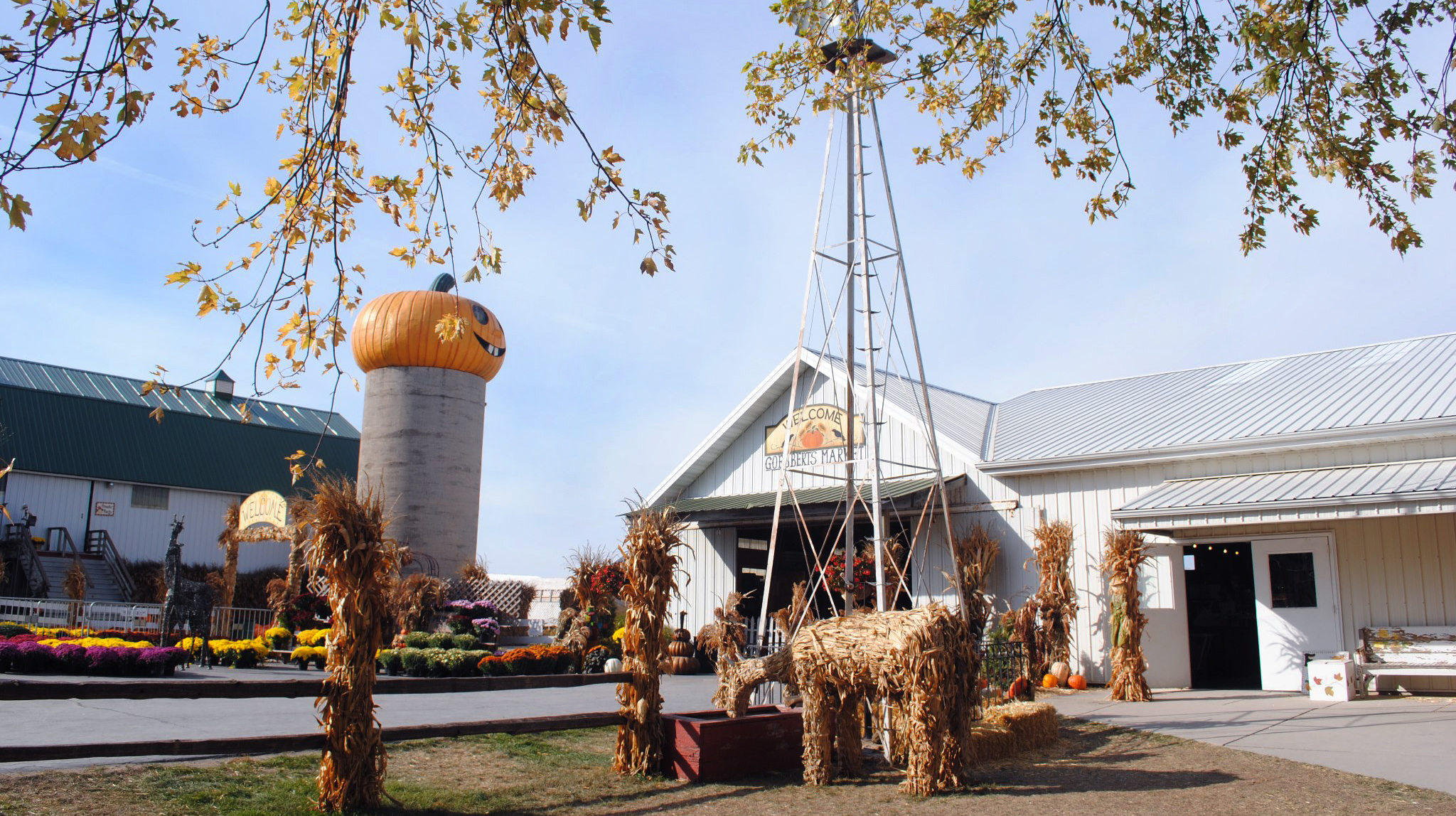 The best pumpkin patches near Chicago