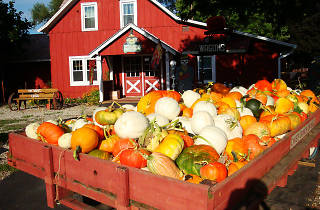 Sonny Acres in West Chicago is one of the best pumpkin patches near Chicago.