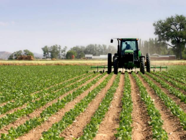Ciència i societat: Els gens de les plantes que mengem