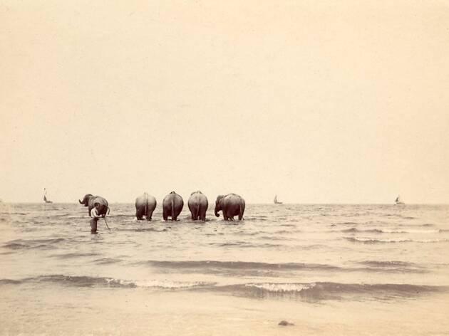 (Photographe amateur, 'Les Eléphants du cirque Sanger aux bains de Trouville', 1896 / Courtesy Lumière des Roses)