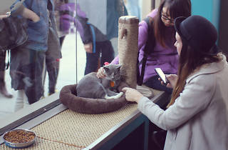 Cats on cats on cats: First permanent cat cafe might come to NYC