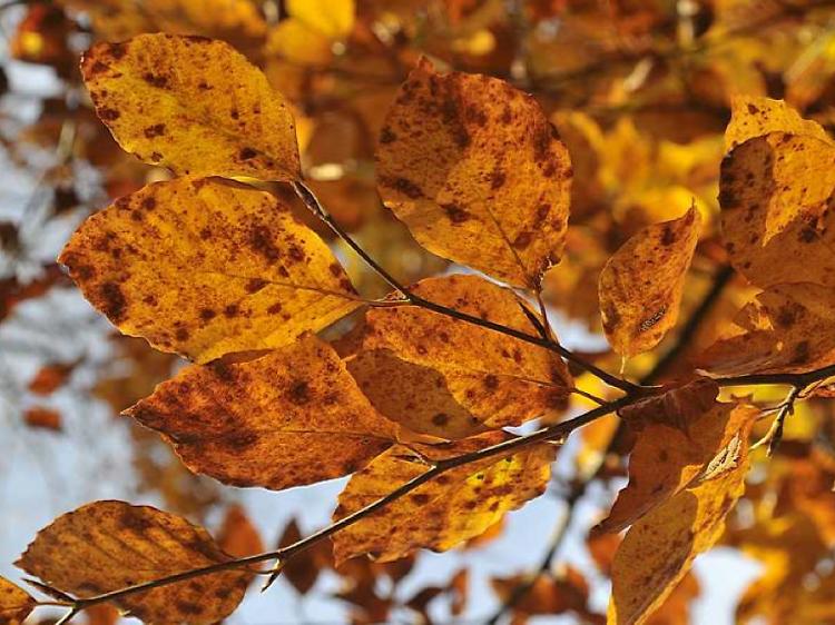 Observer les feuilles rougir au jardin du Luxembourg