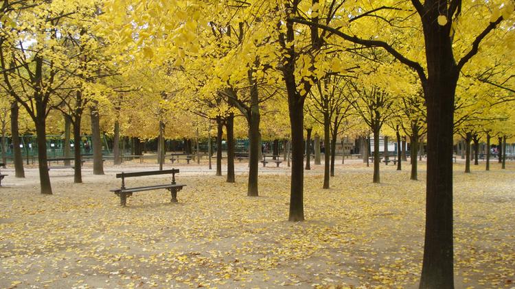 Jardin du Luxembourg (CC BY 2.0 © Jim K-Town)