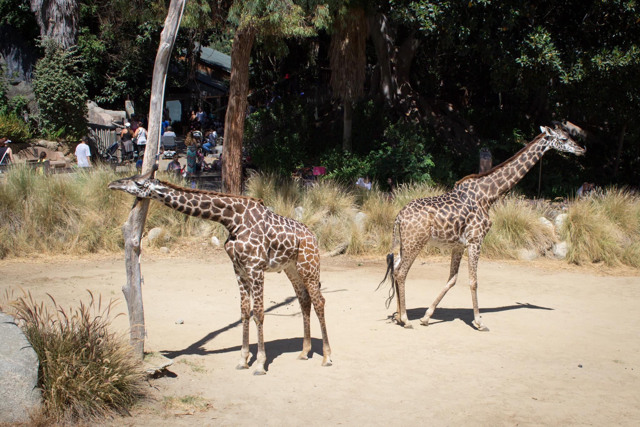 Los Angeles Zoo.