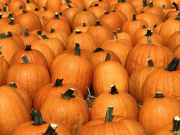 Cottone and Sons Pumpkin Patch