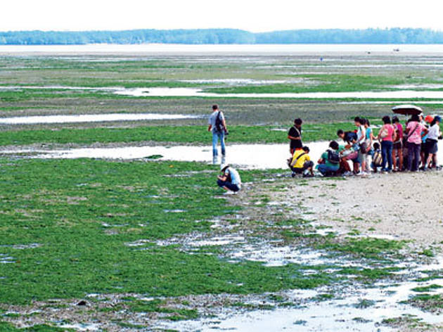 Free Guided Tour at Sungei Buloh Wetland Reserve