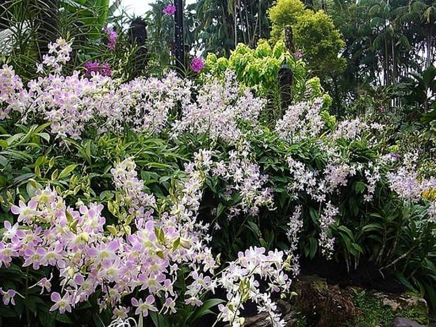 National Orchid Garden Tour