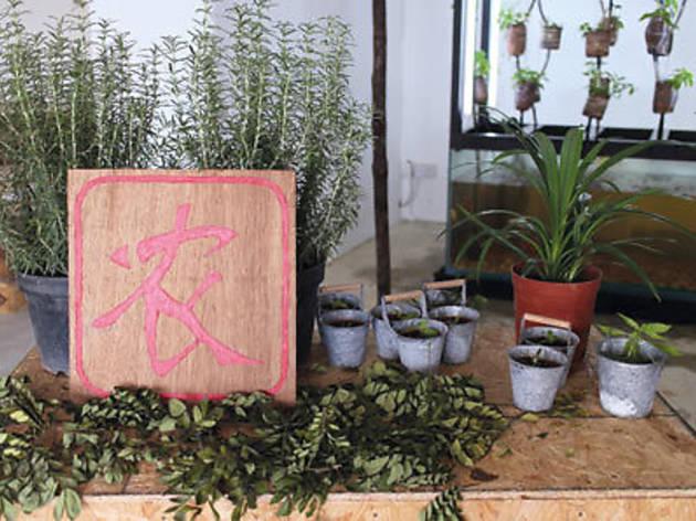 The principles of organic gardening