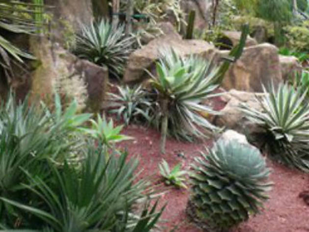 Cacti and Succulents: How to grow and identify plants from dry climates