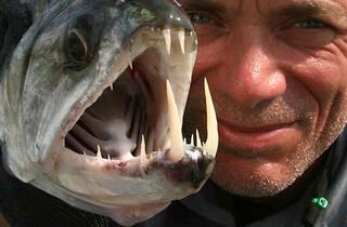 River Monsters Live at River Safari