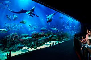 S.E.A. Aquarium promotions